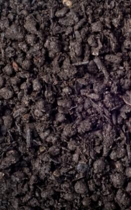 Komposto atsijos