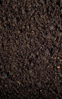 kompostine-zeme-vejoms